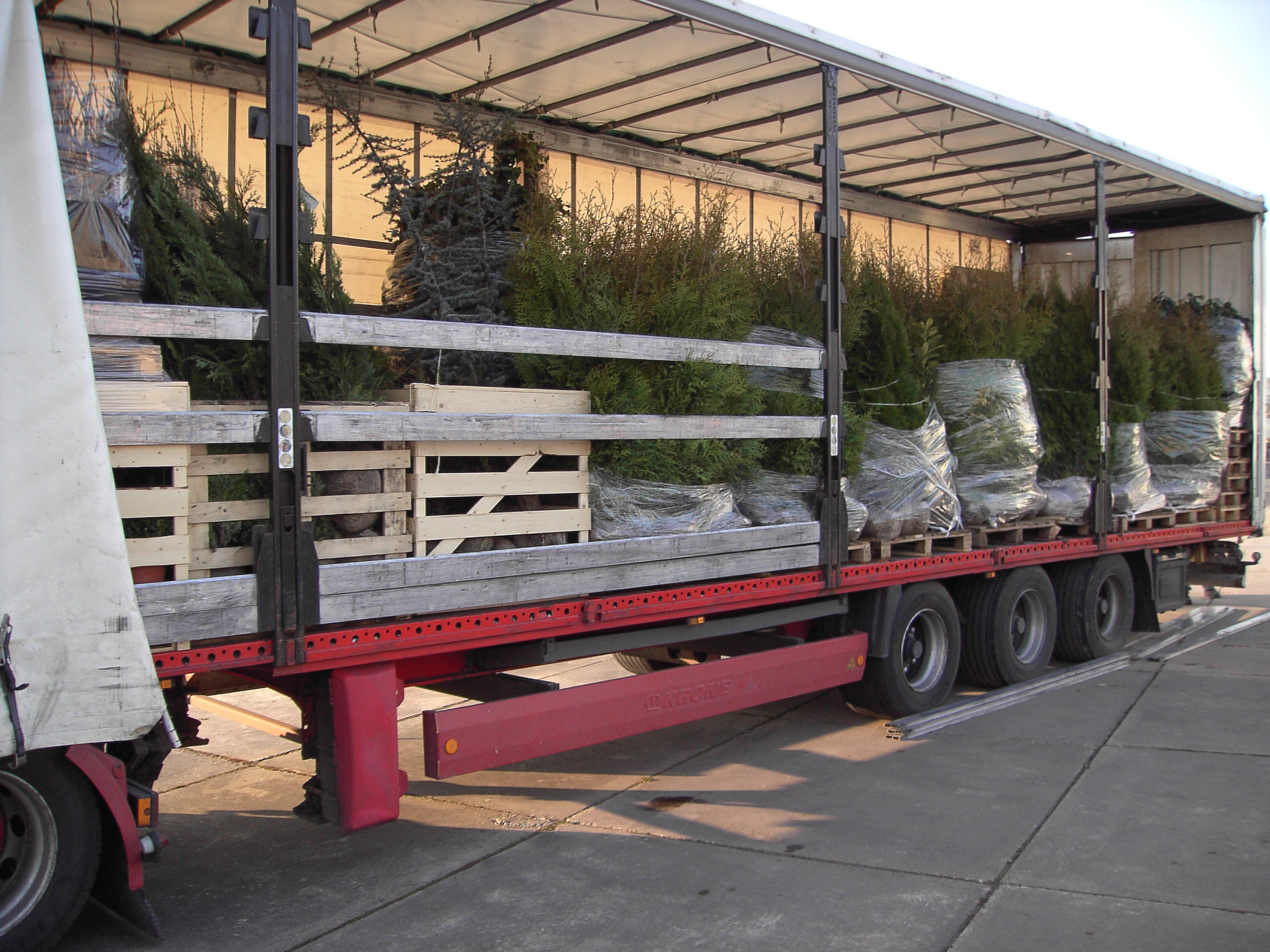 Export of plants to Germany