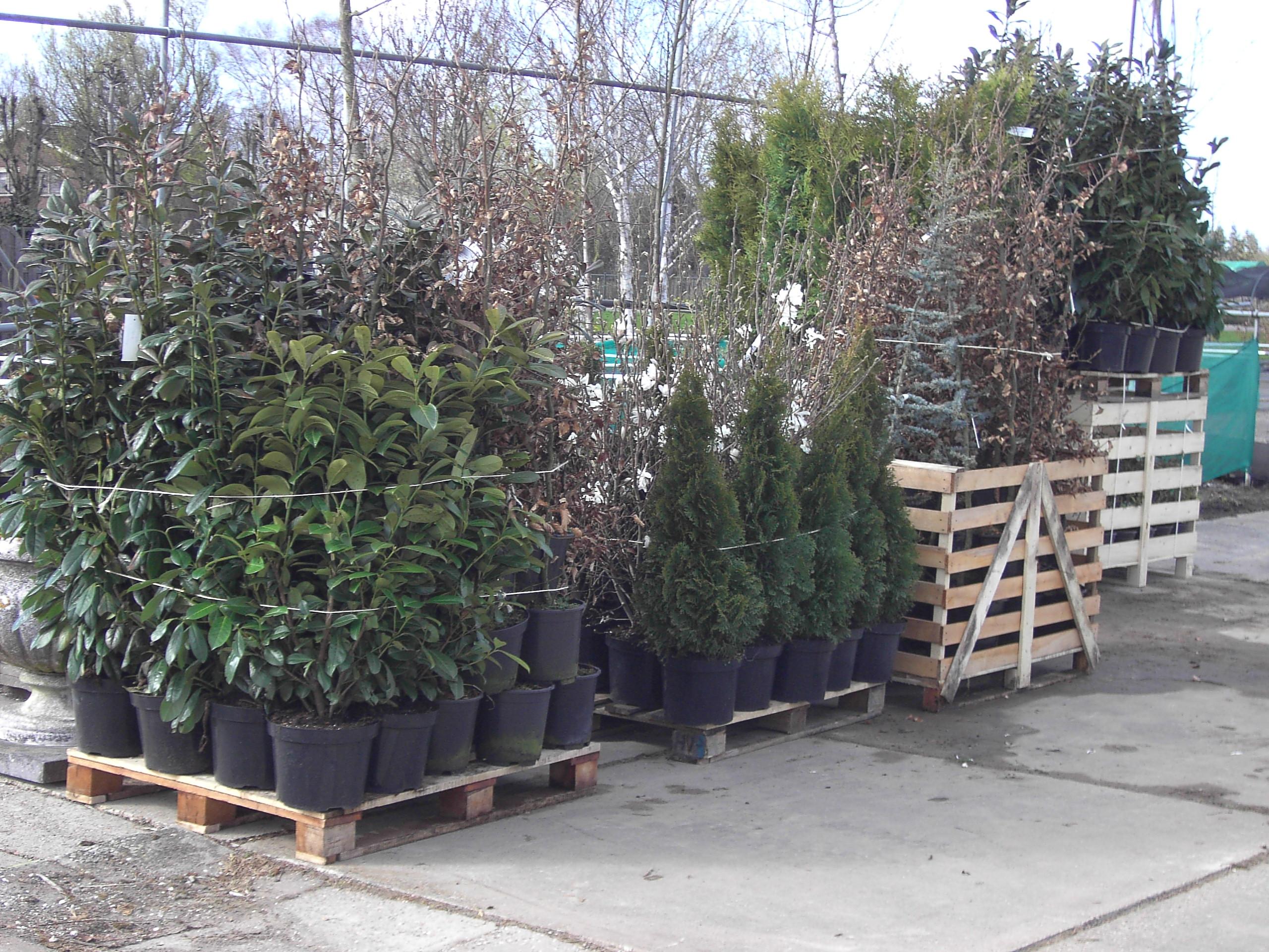 Export van planten naar Duitsland, Zweden, Denemarken en Noorwegen