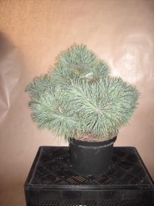Planten 021