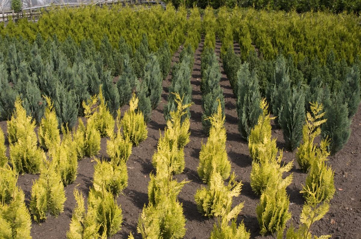 Planten uit Nederland Boskoop